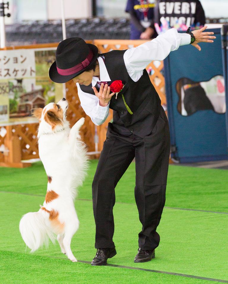 ph_dogdance